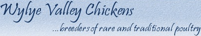 Rare Breed Poultry For Sale | Wylye Valley Chickens - breeders of rare and traditional poultry